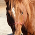 5 Yr Old Qtr Horse Mare *Video*