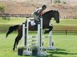 Beautiful Horse for Half Lease, Great for Beginners through 3'3 jumpers