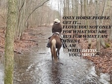 Trail horse, beautiful and sweet