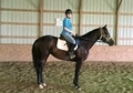 Outstanding conformation, well started 2008 Dark Bay Thoroughbred Mare