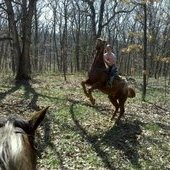 **SOLD**Awesome Appaloosa Gelding