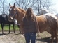 **SOLD**Awesome Appaloosa Gelding for sale in United States of America