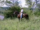 Paso Fino Gelding -Buddy for sale in United States of America