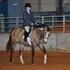 Dun Buckskin Overo All Around Youth Gelding