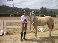 Flashy 2 year old gelding