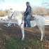 SAFE Family TRAIL horse!  Road  safe  Trail rides alone!SWEET Kind Gentle Great ride!