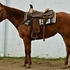 Incredible AQHA Mare, Reining, Cows, All-Around