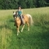 PALOMINO TENNESSEE WALKER