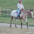 All-Around Appaloosa Mare