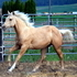 Classy Palomino filly- sired by World Ch Severance Chex