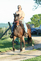 Beautiful Bay Kentucky Mountain Mare for sale in United States of America