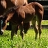 Wimpyneedsacocktail Bay Filly