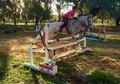 3'+ Hunter/Jumper for Sale