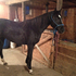 Beautiful Quiet Western Pleasure and Trail Riding Mare