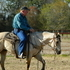 Athletic buckskin gelding for sale!
