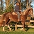 Kentucky Mountain Mare with Very Sweet Disposition