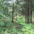 Wooded Acreage with Great Building Site