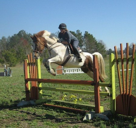 PRICE REDUCED Talented 10yr paint mare for sale! NEW SHOW VIDEOS