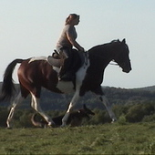Gorgeous Tall Bay Tobiano Reg Paint Mare