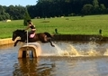 Talented Large Pony Jumper/Eventer
