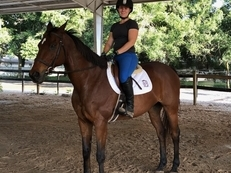 Flashy Bay Gelding