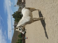 Beautiful, sweet personality. Smart and loving. trail, area. Move...