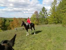Well broke trail, loving gelding safe, sweet & smooth! ! !