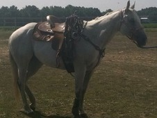 2002 Registered Appaloosa Mare