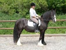 Keeva - playful irish sport mare for riders