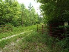 92. 87 Acres. Excellent and Secluded Hunting Property