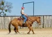 High Step Peppy - 15.1H, 2007' dun AQHA mare