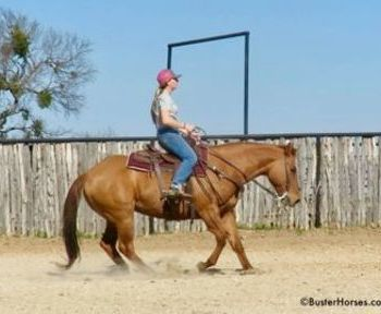 High Step Peppy - 15. 1H, 2007' dun AQHA mare