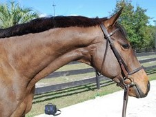 2010 Thoroughbred Gelding