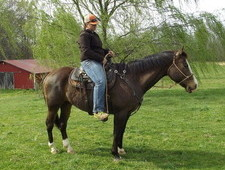 uj Quarter Horse for sale
