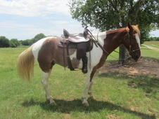 Trail Riding Deluxe-TWH
