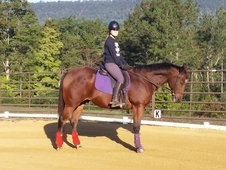 All around english schoolmaster. Tng level eventer. 1st level dsg...