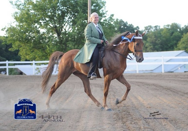 TWH gelding ready to Win for You
