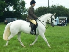 cv Beginner FANTASTIC 14. 2 ALLROUND PONY PLS TEXT ME VIA 214X506...