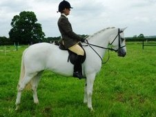 nn Show FANTASTIC 14. 2 ALLROUND PONY PLS TEXT ME VIA 214X506X7881