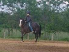 Watch the video, sweet gelding 14 hands