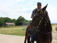 Rocky Mountain well gaited Gelding