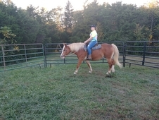 Fun gelding to ride the trails!