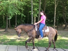 Beautiful Appy/QH Dun mare 15 yrs old