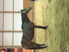 AQHA Appendix mare beautiful movement, real eye catcher