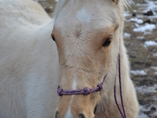 Palomino filly looking for someone to take her and run with her!