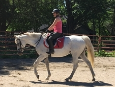 Flashy Freckled Grey Mare