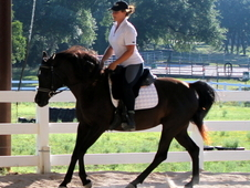 Fairy-tale Gorgeous Black Arabian mare