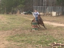Barrel/ranch horse for sale