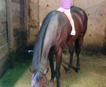 Barrel/Trail thoroughbred Mare!