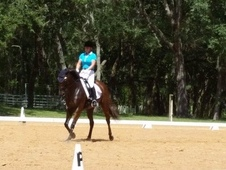Looking For Talented Dressage Horse But On A Budget? ? ?